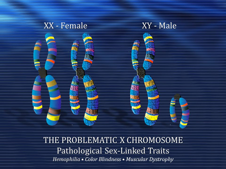 THE PROBLEMATIC X CHROMOSOME Pathological Sex-Linked Traits