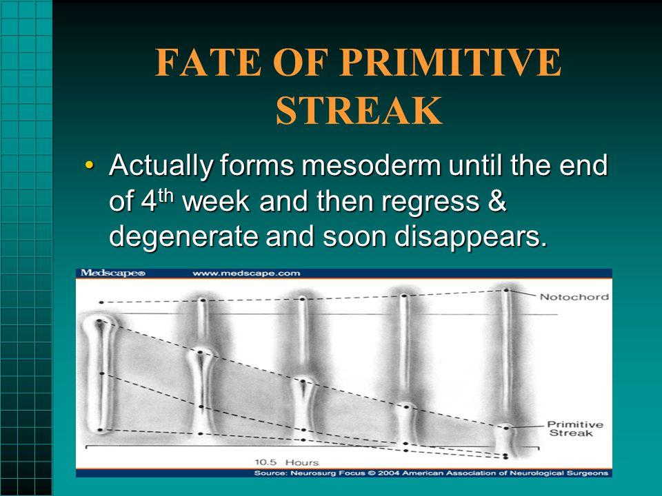 FATE OF PRIMITIVE STREAK