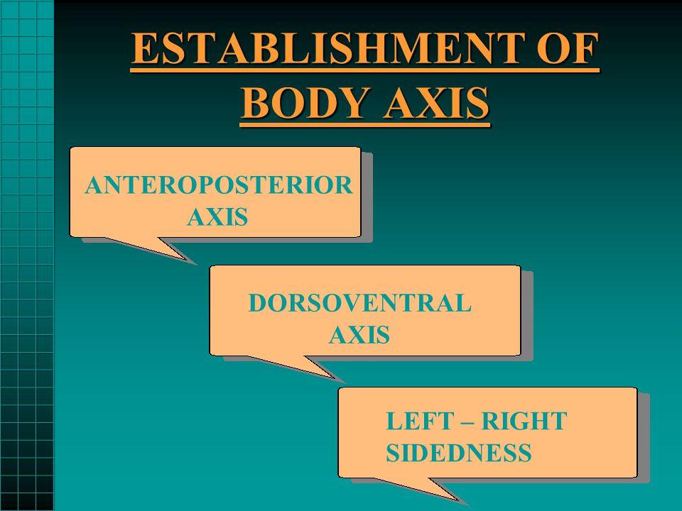 ESTABLISHMENT OF BODY AXIS