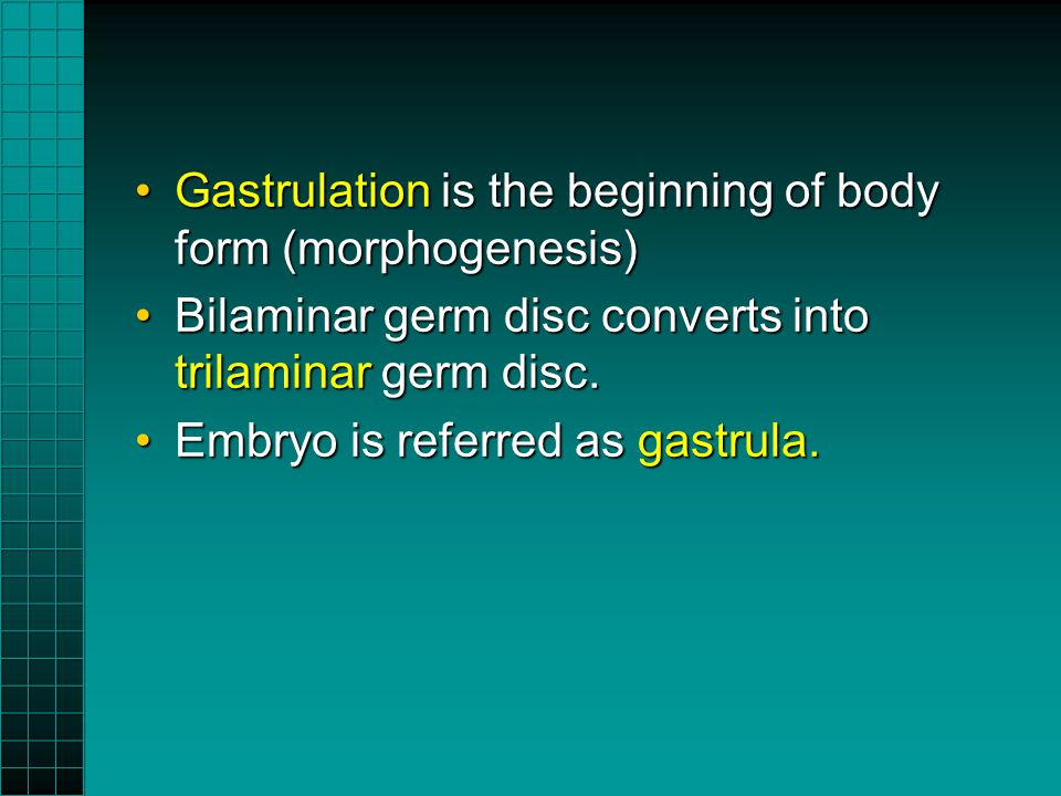 Gastrulation is the beginning of body form (morphogenesis)