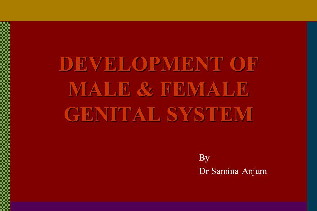 DEVELOPMENT OF MALE & FEMALE GENITAL SYSTEM
