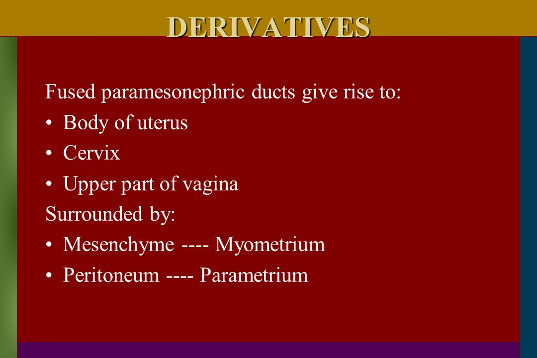 DERIVATIVES Fused paramesonephric ducts give rise to: Body of uterus