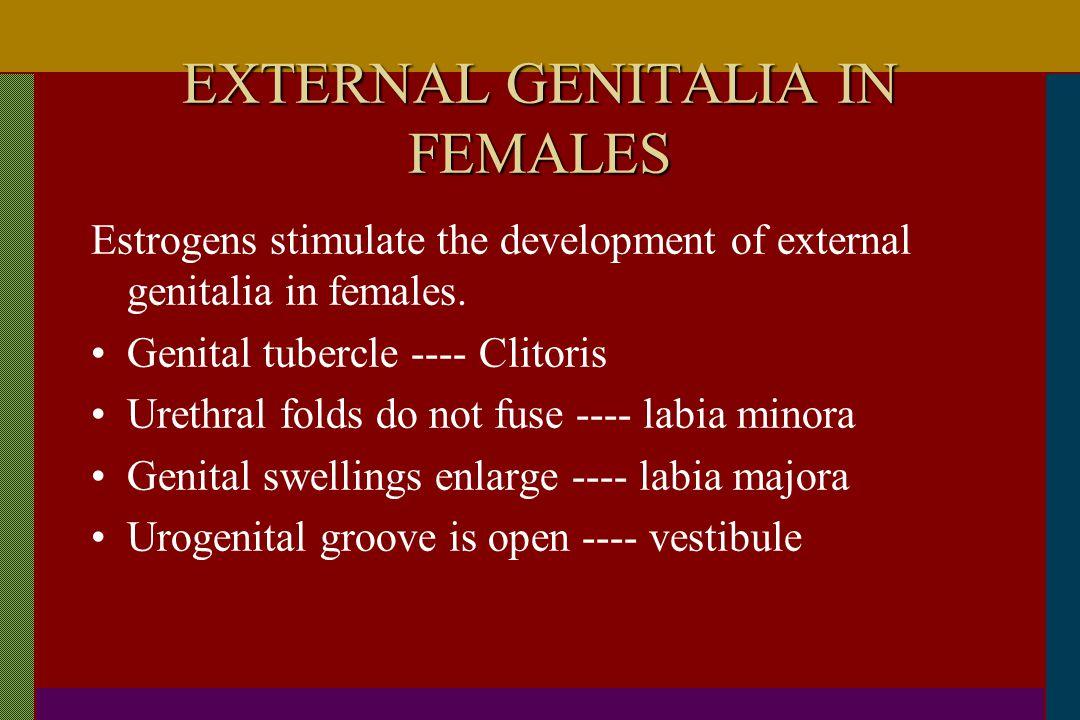 EXTERNAL GENITALIA IN FEMALES