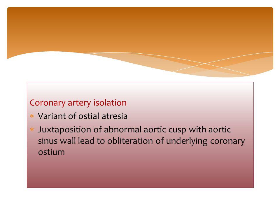 Coronary artery isolation