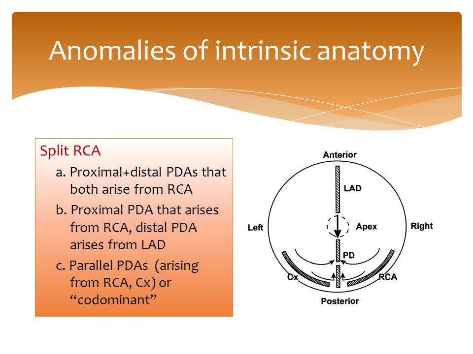 Anomalies of intrinsic anatomy