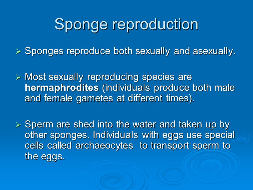 Sponge reproduction Sponges reproduce both sexually and asexually.