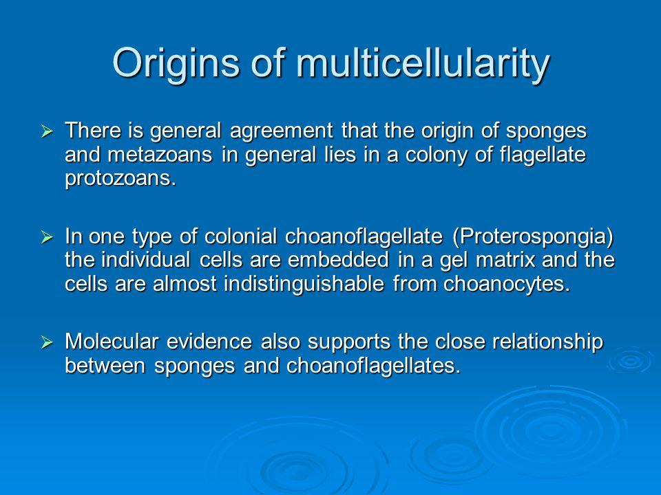 Origins of multicellularity