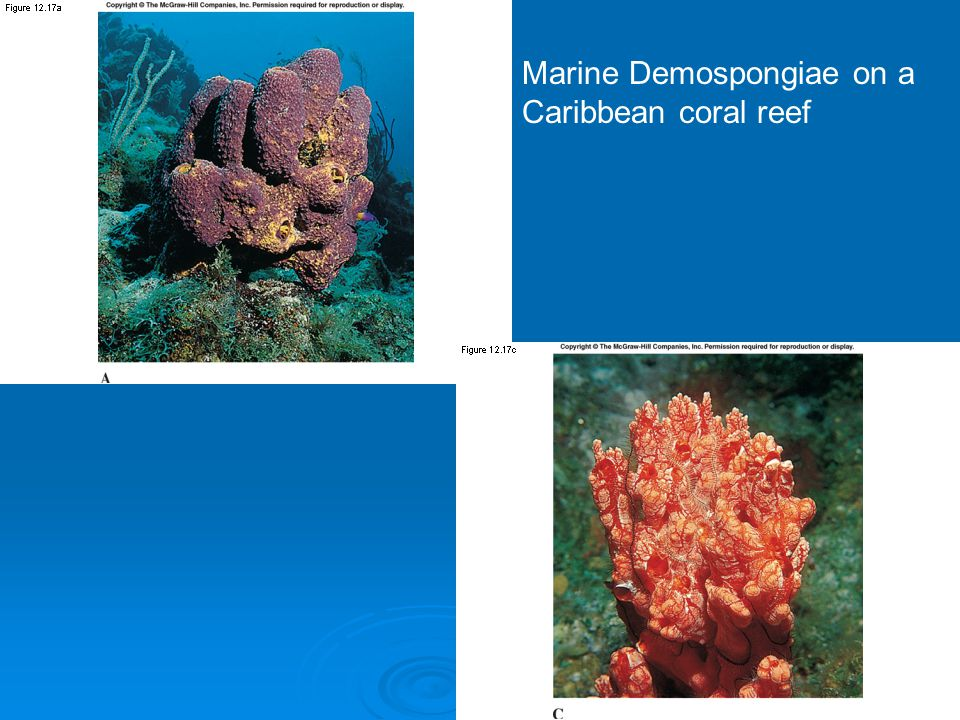 Marine Demospongiae on a