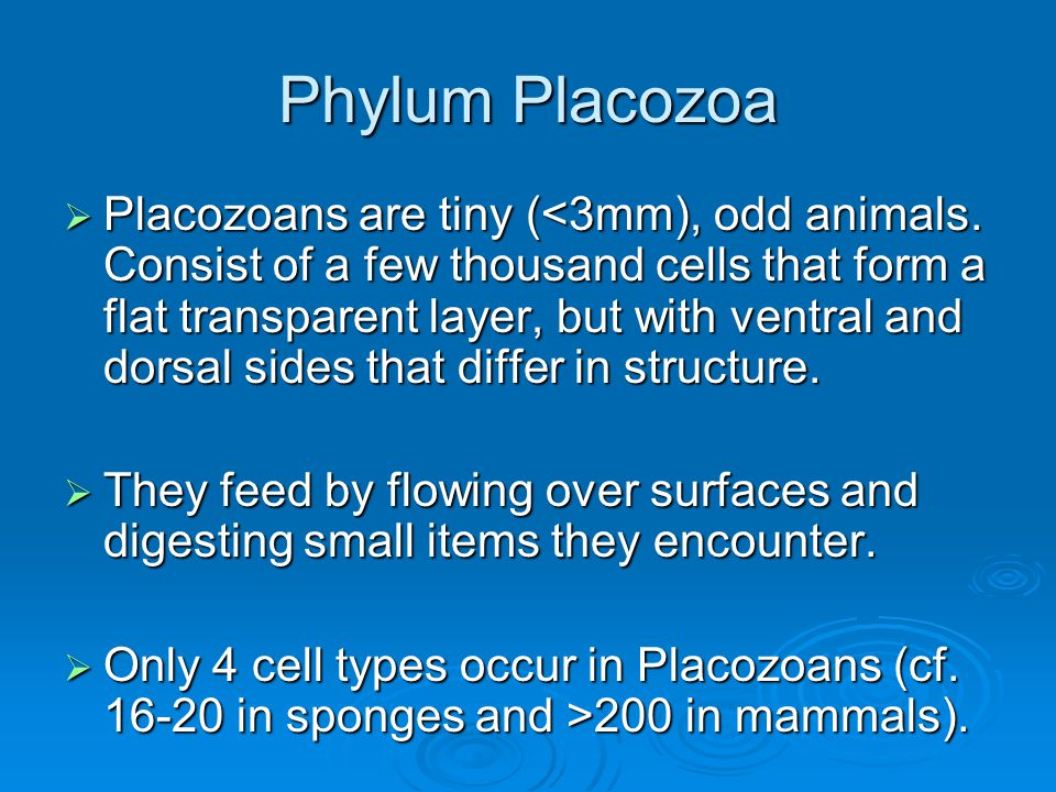 Phylum Placozoa