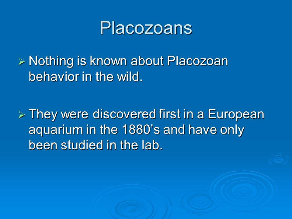 Placozoans Nothing is known about Placozoan behavior in the wild.