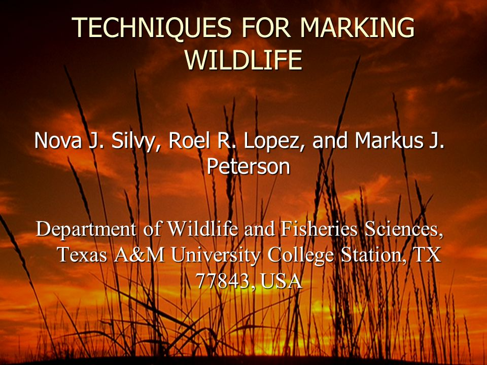 TECHNIQUES FOR MARKING WILDLIFE