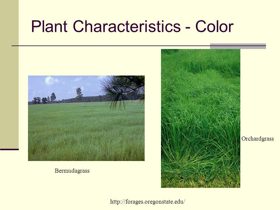 Plant Characteristics - Color