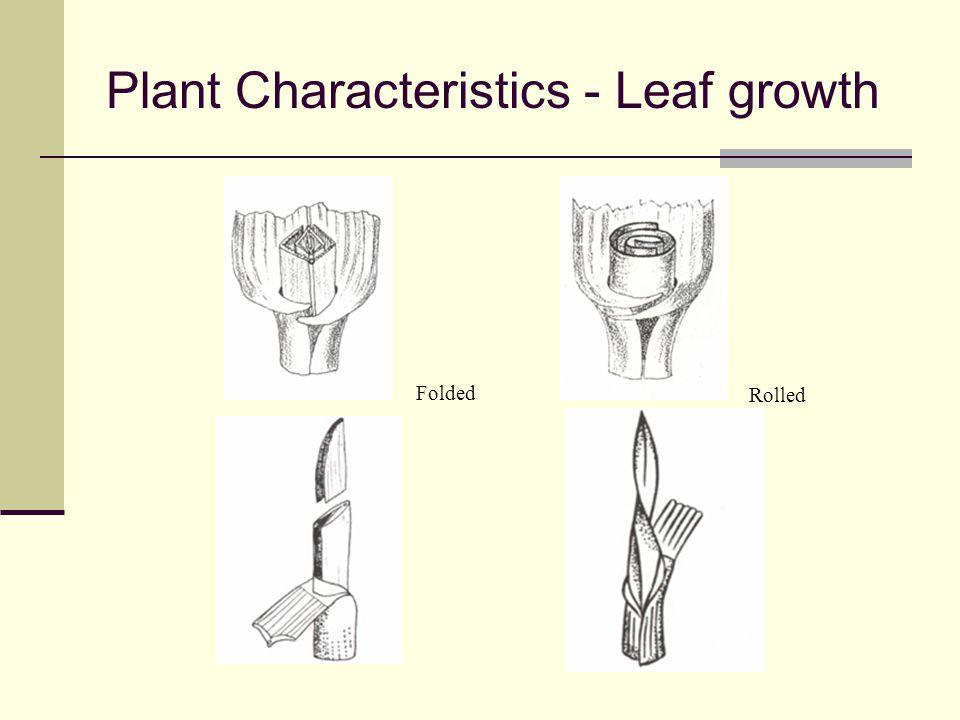Plant Characteristics - Leaf growth