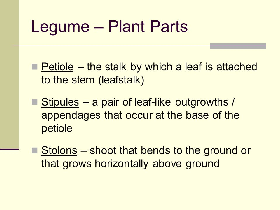 Legume – Plant Parts Petiole – the stalk by which a leaf is attached to the stem (leafstalk)