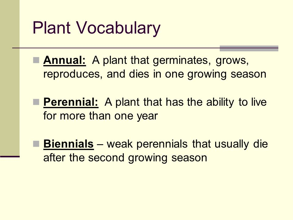 Plant Vocabulary Annual: A plant that germinates, grows, reproduces, and dies in one growing season.