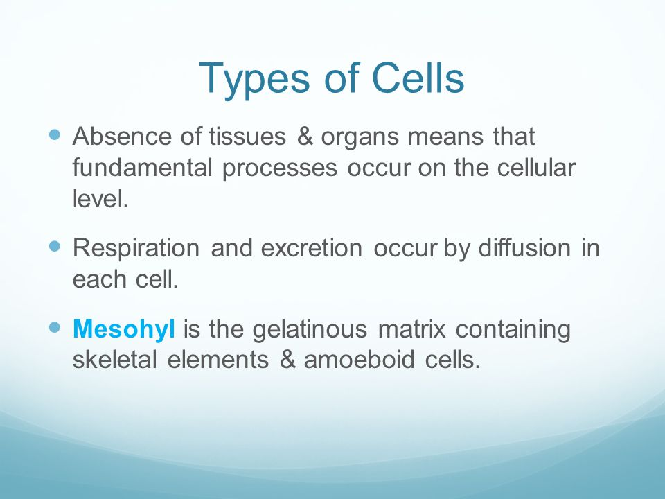 Types of Cells Absence of tissues & organs means that fundamental processes occur on the cellular level.