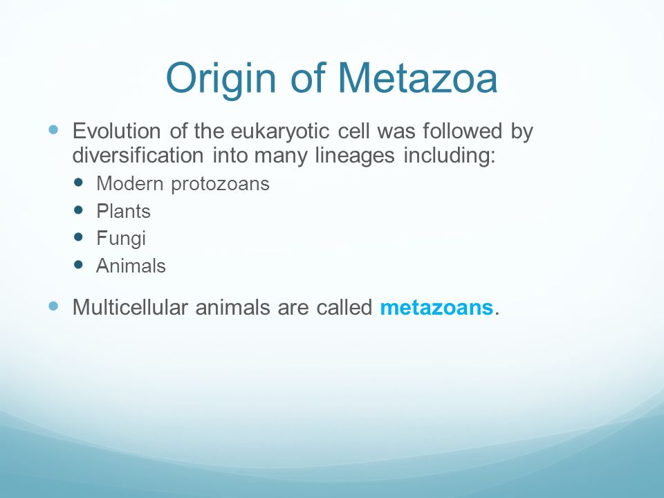 Origin of Metazoa Evolution of the eukaryotic cell was followed by diversification into many lineages including: