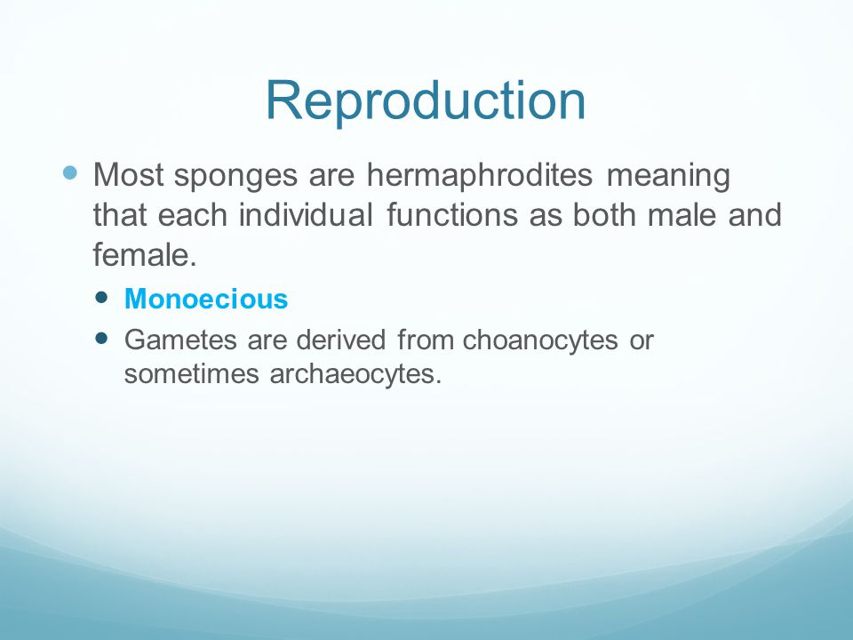 Reproduction Most sponges are hermaphrodites meaning that each individual functions as both male and female.