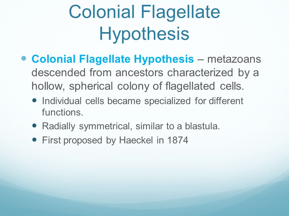 Colonial Flagellate Hypothesis