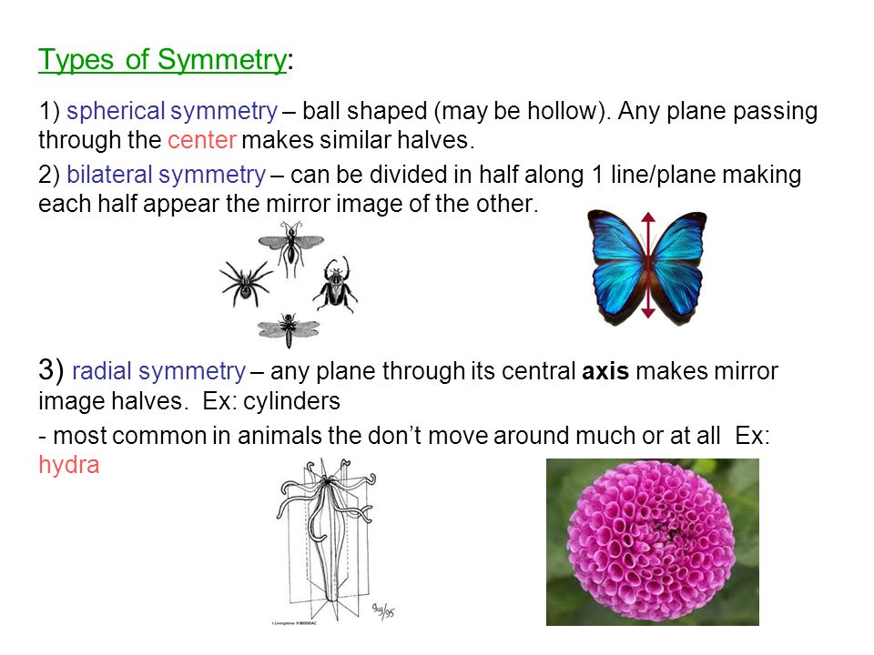 Types of Symmetry: 1) spherical symmetry – ball shaped (may be hollow). Any plane passing through the center makes similar halves.
