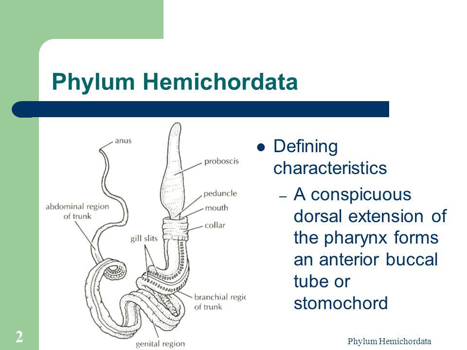 Phylum Hemichordata Defining characteristics