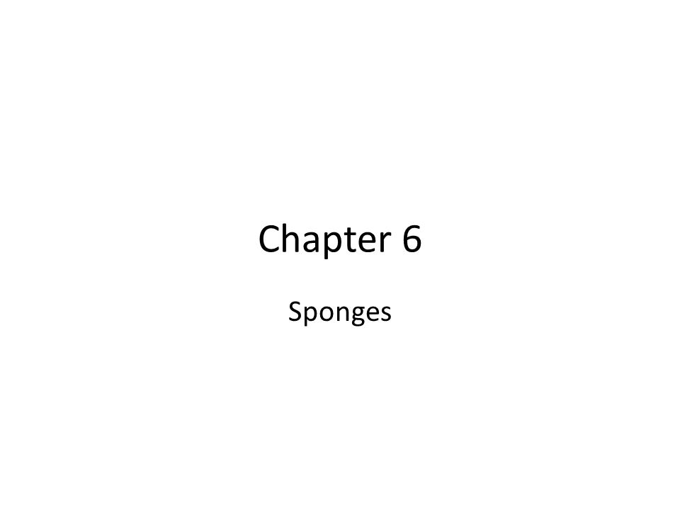 Chapter 6 Sponges