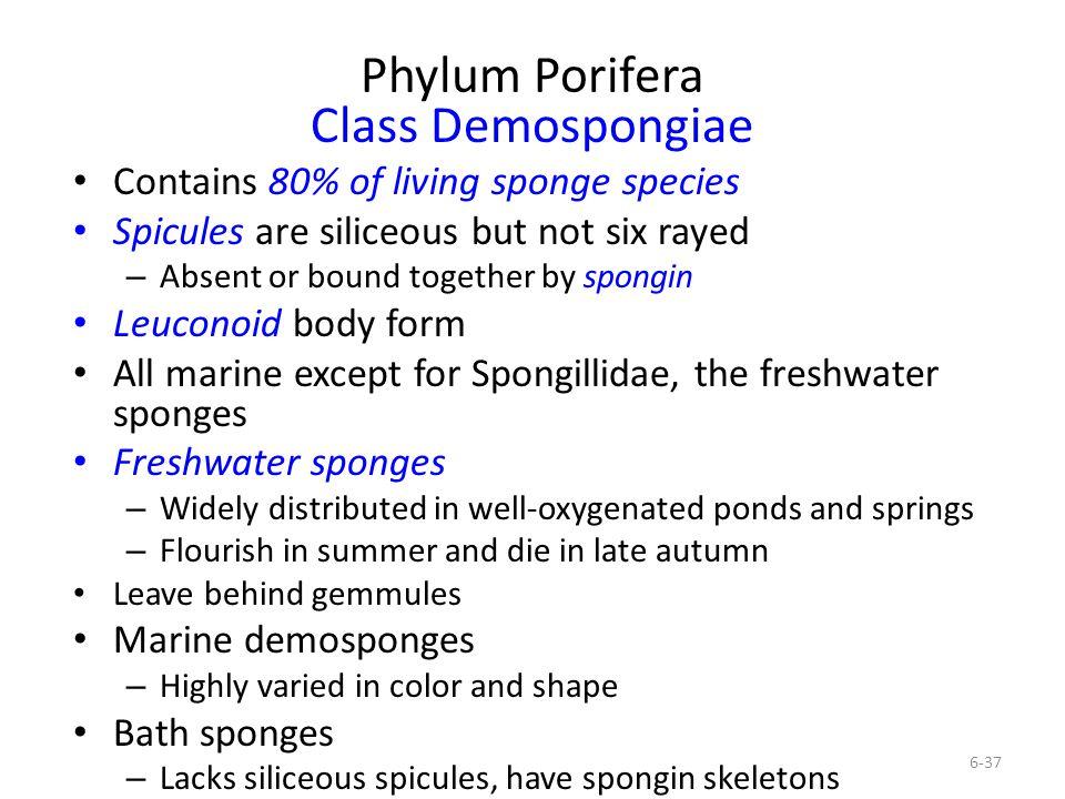 Phylum Porifera Class Demospongiae