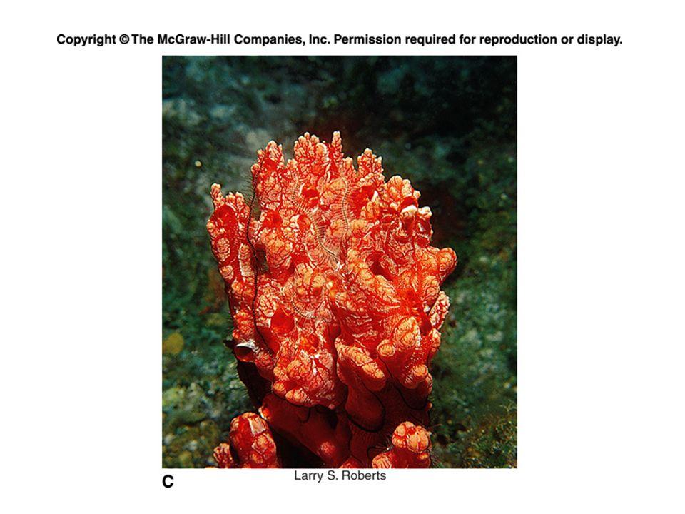 Figure 6_13c