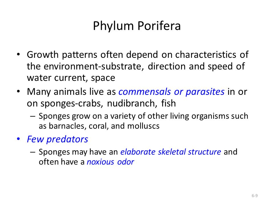 Phylum Porifera Growth patterns often depend on characteristics of the environment-substrate, direction and speed of water current, space.