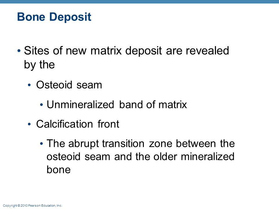 Sites of new matrix deposit are revealed by the