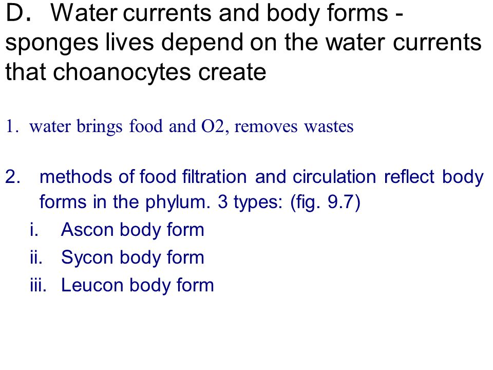 D. Water currents and body forms - sponges lives depend on the water currents that choanocytes create