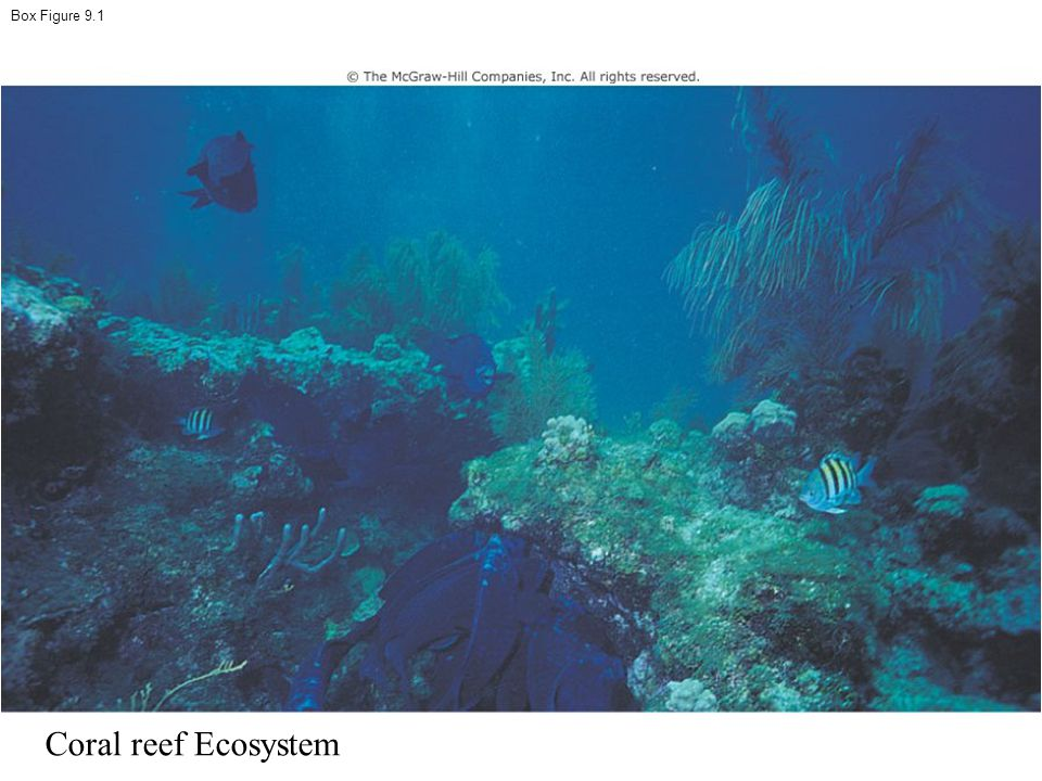 Box Figure 9.1 Coral reef Ecosystem