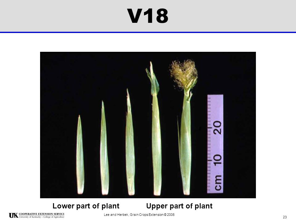 V18 Lower part of plant Upper part of plant