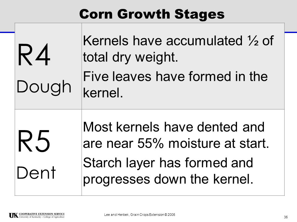 R4 R5 Dough Dent Kernels have accumulated ½ of total dry weight.