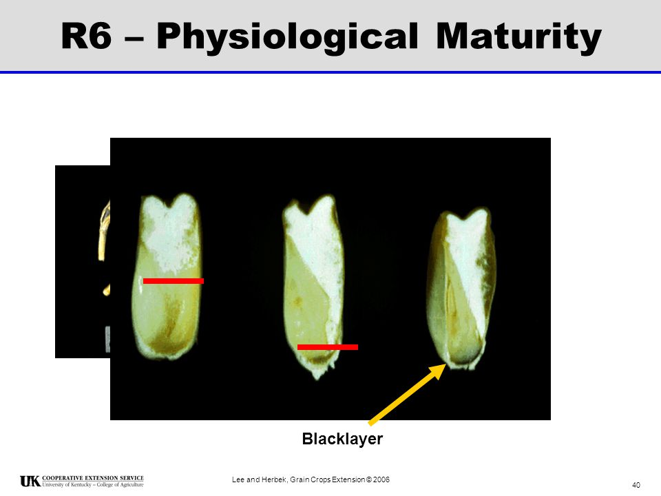 R6 – Physiological Maturity