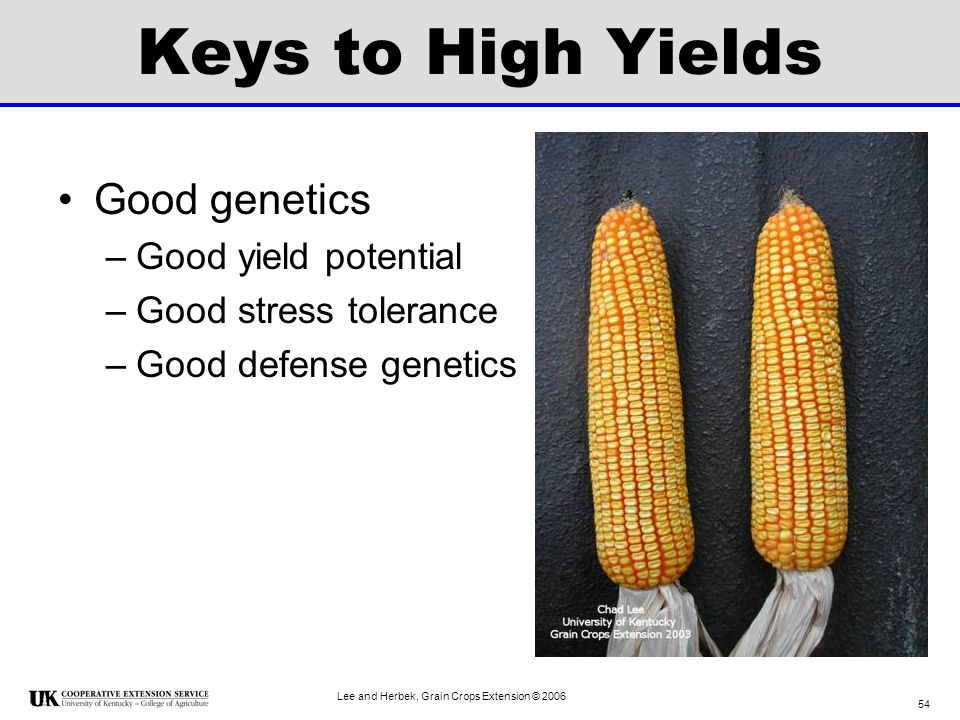 Keys to High Yields Good genetics Good yield potential