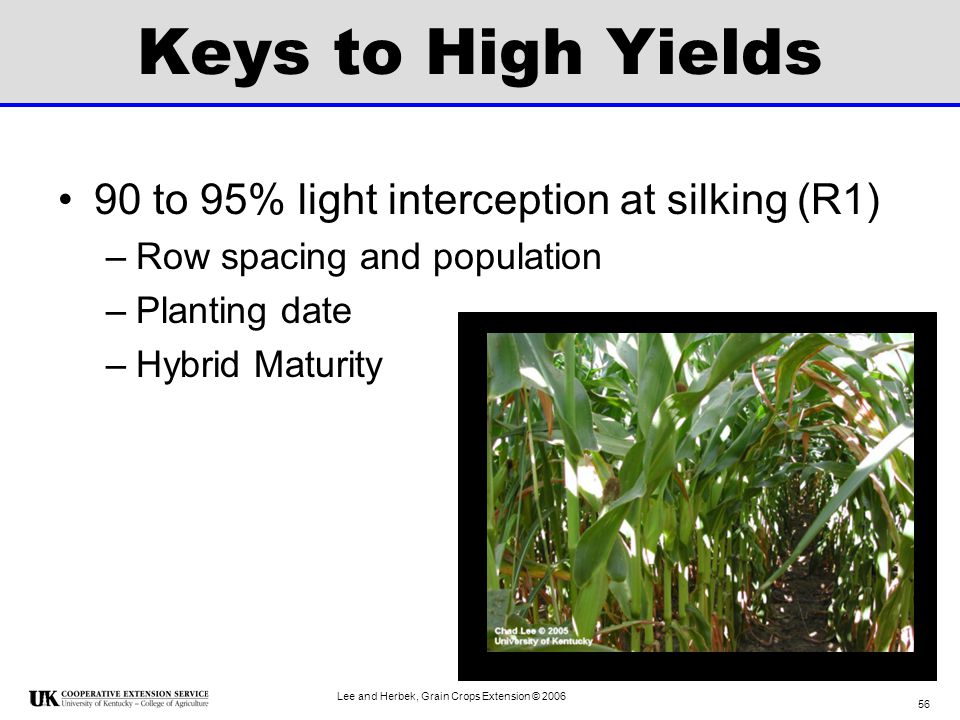 Keys to High Yields 90 to 95% light interception at silking (R1)
