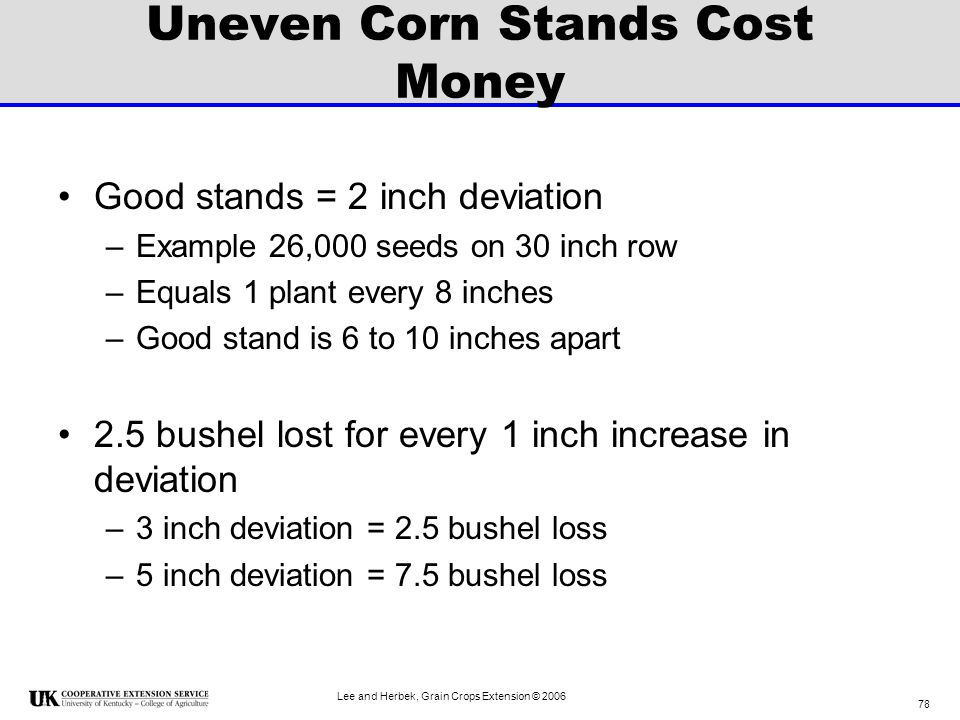 Uneven Corn Stands Cost Money