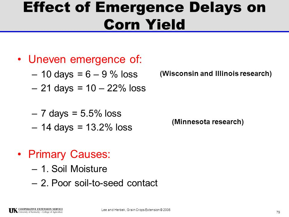 Effect of Emergence Delays on Corn Yield