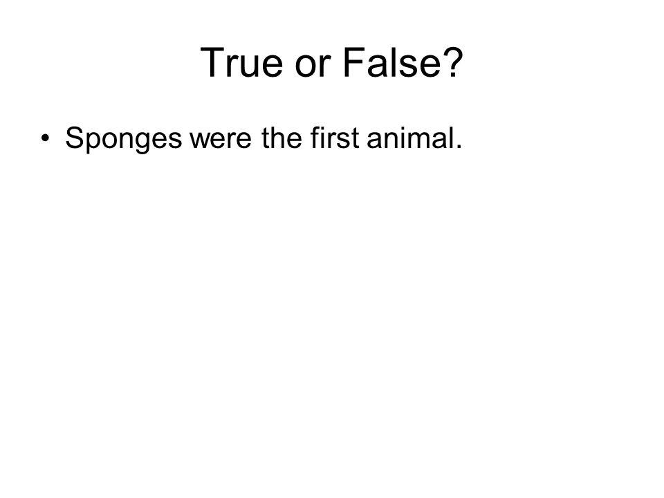 True or False Sponges were the first animal. true