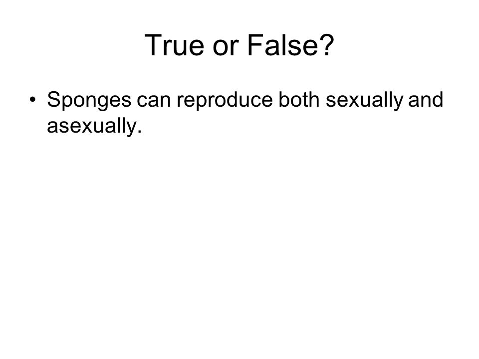 True or False Sponges can reproduce both sexually and asexually. true