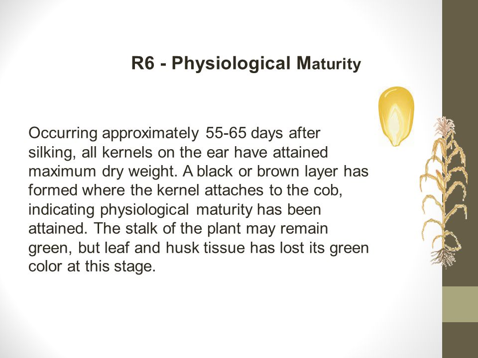 R6 - Physiological Maturity