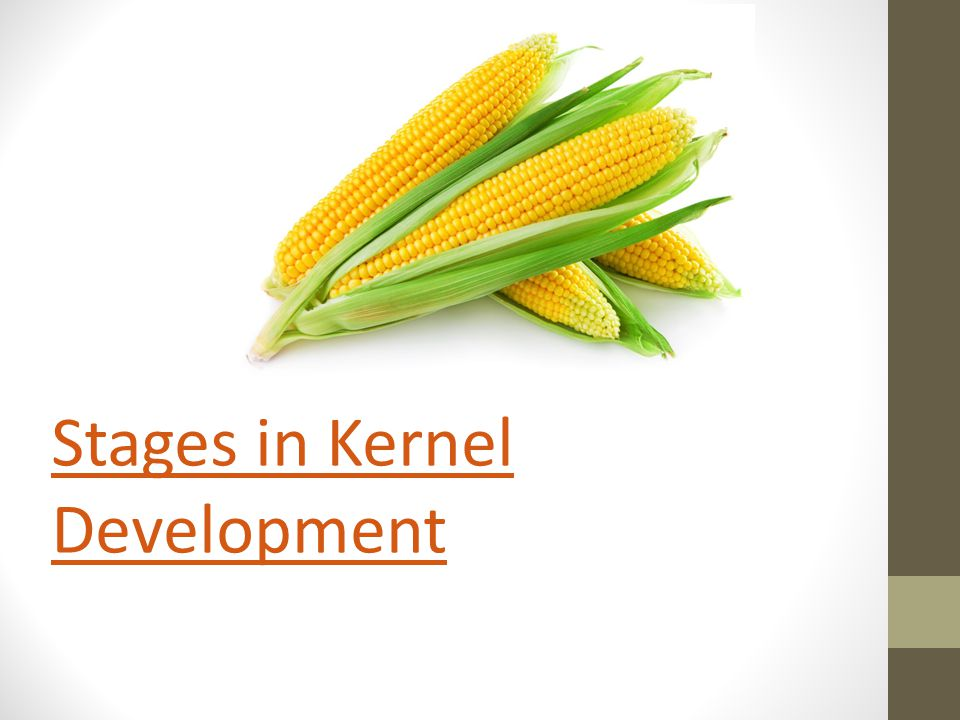 Stages in Kernel Development