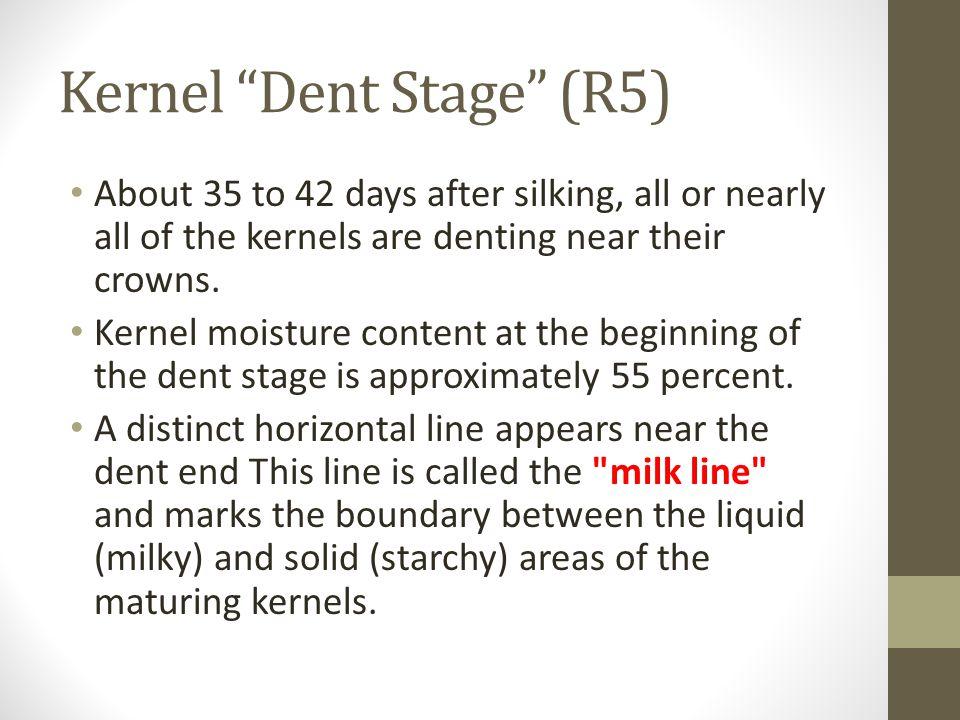 Kernel Dent Stage (R5)