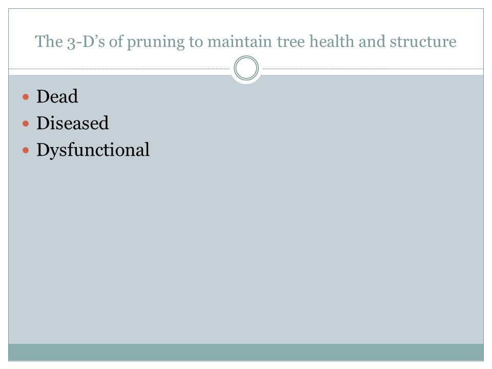 The 3-D's of pruning to maintain tree health and structure