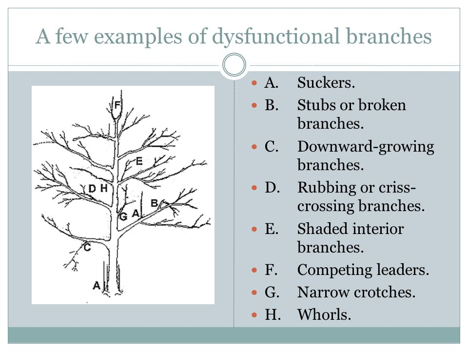 A few examples of dysfunctional branches