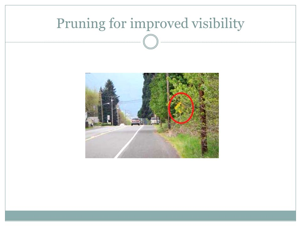 Pruning for improved visibility
