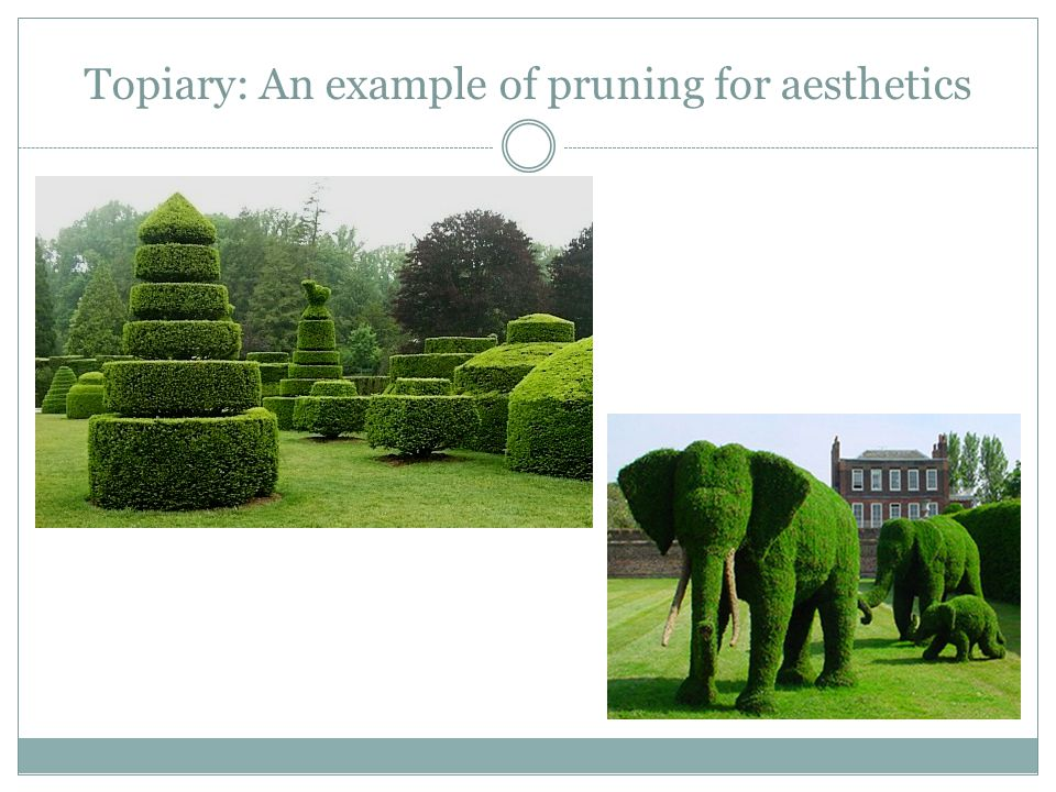 Topiary: An example of pruning for aesthetics