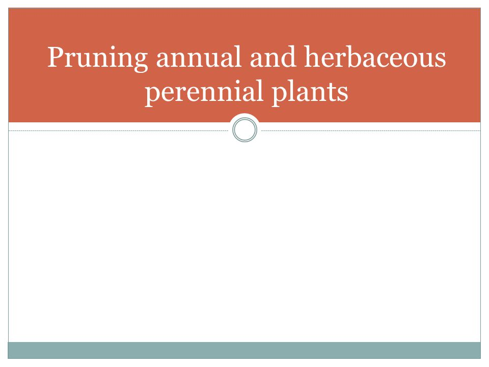 Pruning annual and herbaceous perennial plants