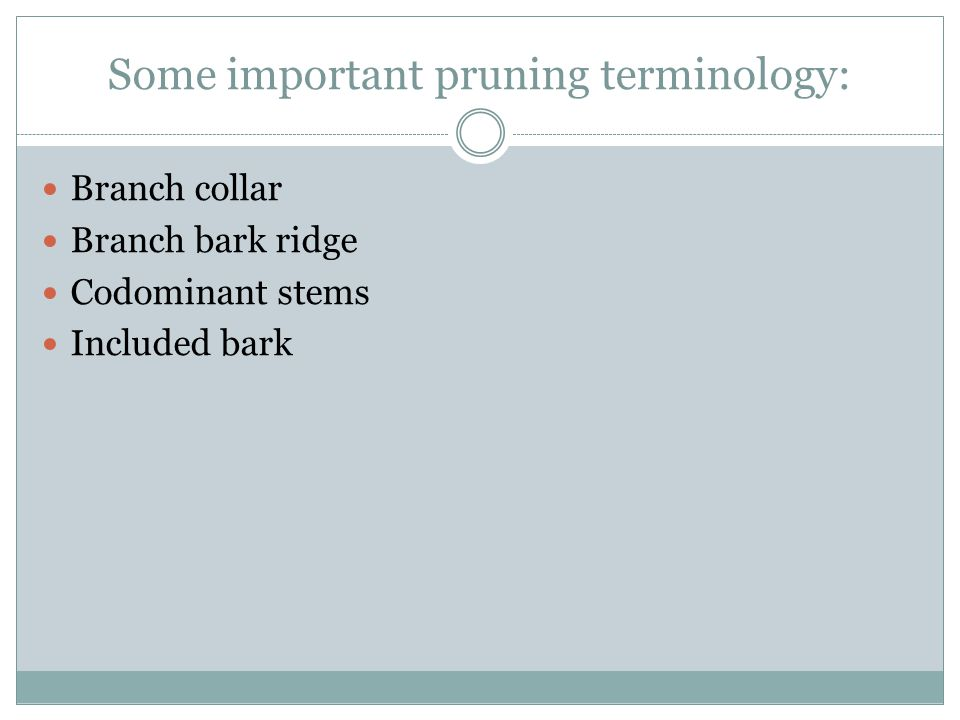 Some important pruning terminology: